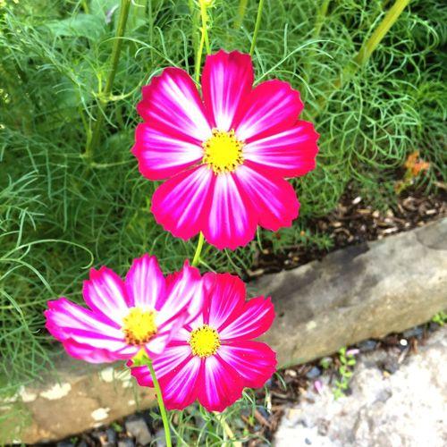 Flowers Ashram Namaste Monroe, New York Artsy