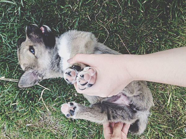 Love Pupy Enjoying Life Cute Pets Cute Dog