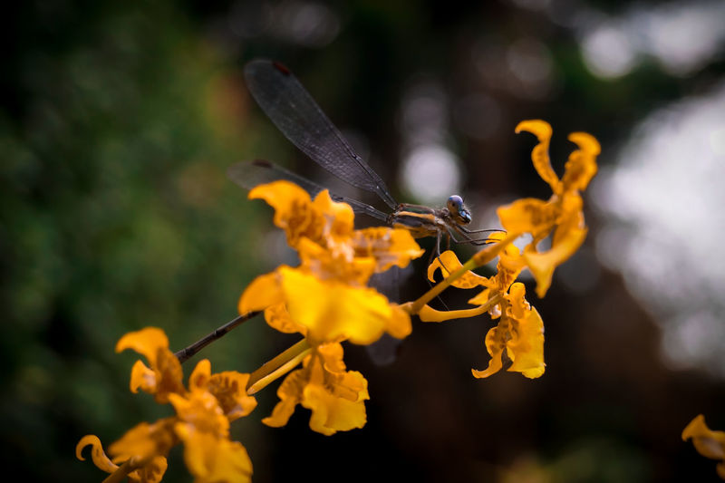 Close-up of butterfly pollinating on yellow flowering plant