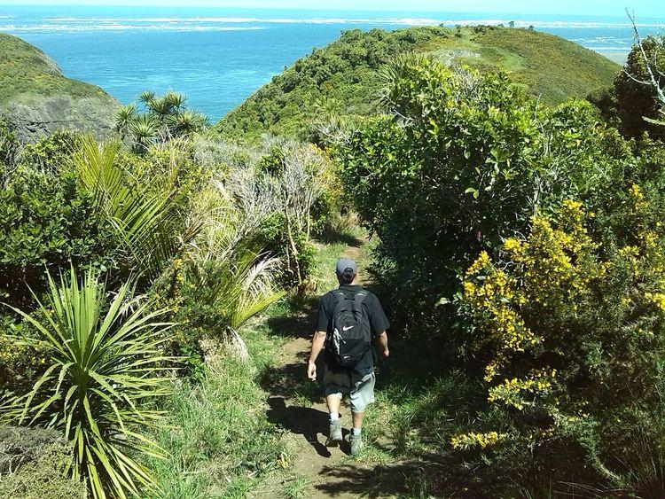 The Tourist Whatipu NZ Little Walks