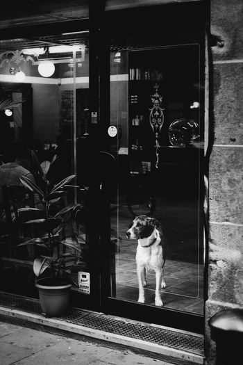 The Street Photographer - 2018 EyeEm Awards Dog Pets Door Indoors  Domestic Animals Streetphotography_bw Streetphoto Streetphoto_bw Urban Life EyeEm Gallery Street Street Life Urban Lifestyle Barcelona Urban Eye4photography  EyeEm Best Shots Street Photography Streetphotography Animal Themes City Life Closed Door Behind The Window Observing Black & White Friday