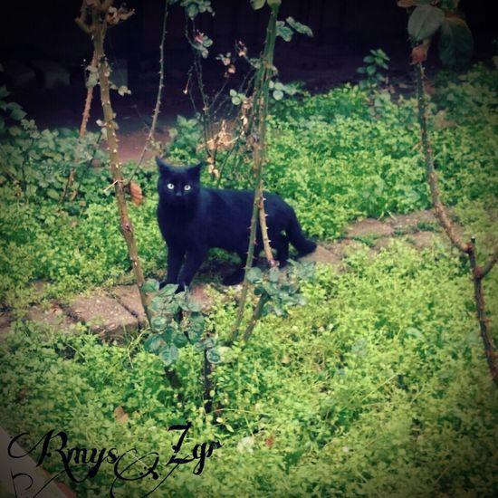 Catcatcat Kedi Kedi Aşkı Pisicik