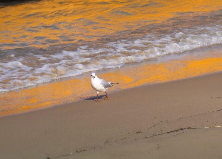Sand Sea Shore One Animal Bird Water Day Nature