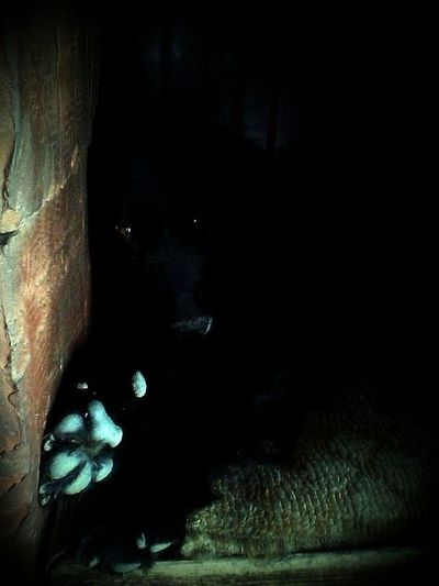 In the dark Dogs House Lonely Black Background Close-up Contemplation Dark Dog Dogs Head Emotion Isloated Looking One Animal Portrait Scared