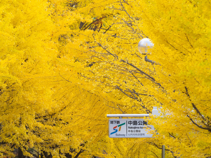 Yellow Text Communication No People Western Script Day Plant Autumn Sign Nature Close-up Outdoors Tree Leaf Wood - Material Plant Part Full Frame Change Environment Message Sapporo Hokkaido Japan