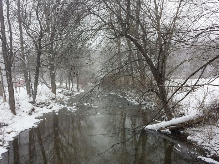 Winterscapes Natures Natural BeautyWinter Trees Apple Tree Brown Apples River Water Reflections Peaceful Open Edit