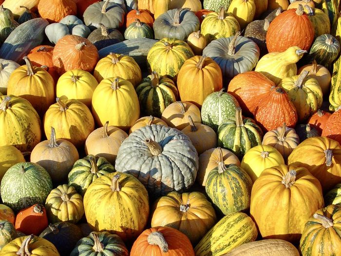 Pumpkins Food Pumpkin Food And Drink Large Group Of Objects Healthy Eating Full Frame Freshness Backgrounds Multi Colored