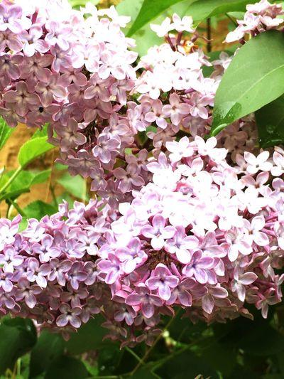 Taking Photos Baum Baum & Zeit Blumen Spring Flowers Cicekler Flowerporn Ciceklerim Flowers Flower Porn Flowers,Plants & Garden Ilkbahar Garten Frühling My Garden BahceGarden In My Garden