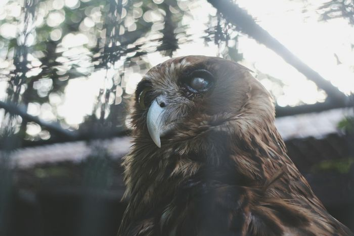 """even imperfection has its own ideal or perfect state"" Nature Photography Fave among all the pics i took First Eyeem Photo Nature_collection Animal Wildlife Animal Photography Animal_collection Imperfection Is Beauty Imperfection Beauty In Nature Owl Eyes Owl Photography Owl The Week On EyeEm"