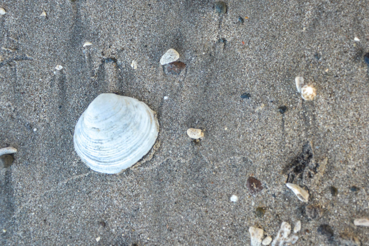 shell, land, sand, beach, animal shell, seashell, animal, nature, high angle view, animal wildlife, animal themes, no people, day, close-up, textured, animals in the wild, outdoors, solid, water, pattern