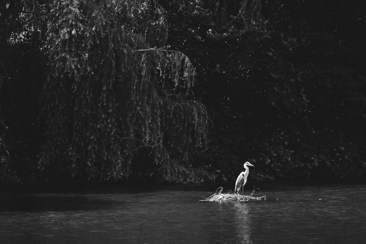 Beauty In Nature Black And White Day Forest Lake Leisure Activity Lifestyles Men Motion Nature One Person Outdoors Plant Real People Scenics - Nature Tree Water Waterfront