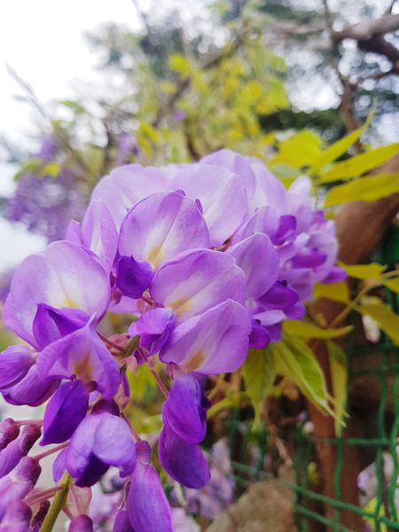Flower Head Flower Petal Purple Close-up Plant Iris - Plant In Bloom Pollen Plant Life Sunflower