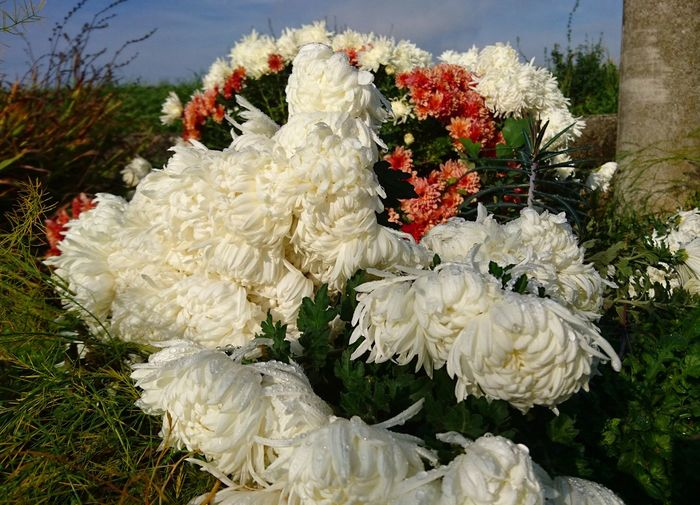 flowers Garden Flowers Flowers, Nature And Beauty Beauty In Nature Flower Head No People Blossom
