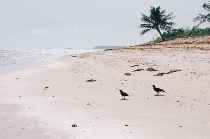 Birds on beach against sky