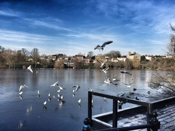 Diss Mere Nature Water Birds Wildlife Photography