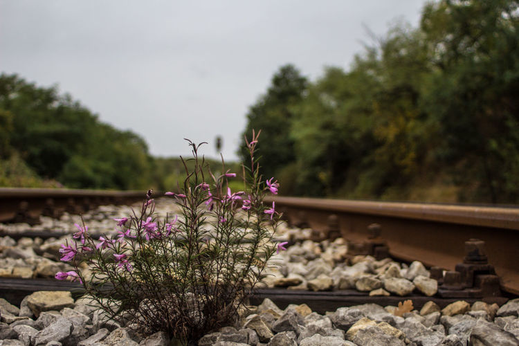 View of flowering plants by railroad track