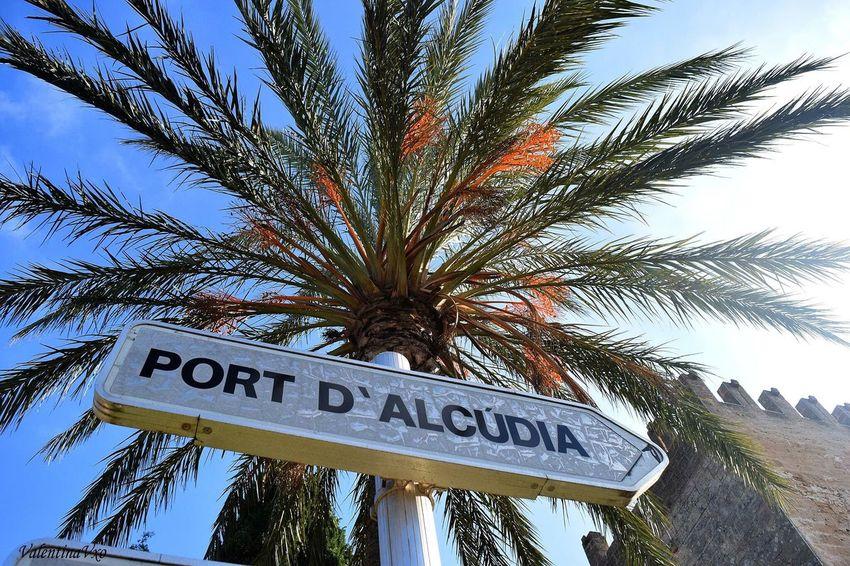 Nothing better than sun and palm trees Mallorca Palma De Mallorca Palm Tree Summer Holiday Travel Destinations