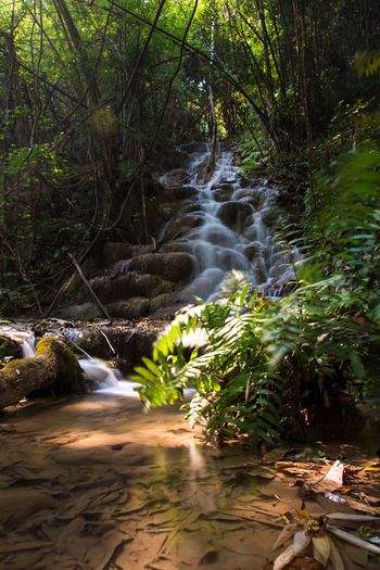 Chiang Rai, Thailand Beauty In Nature Chiangrai Day Forest Moss Nature No People Outdoors Plant Pu Kang Waterfall River Scenics Stream - Flowing Water Tranquility Tree Water Waterfall