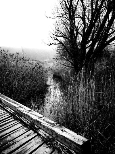 Tree Railroad Track Rail Transportation Sky