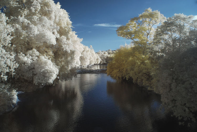 An infrared view of calm morning sunrise with blue sky, white and yellow foliage trees. Calm Calmness Infrared White Foliage Abstract Arts Beauty In Nature Color Infrared Day Infrared Photography Landscape Nature No People Outdoors Scenics Sky Tranquil Scene Tranquility Tree Water Yellow Foliage