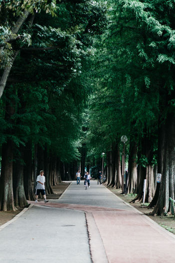 Day Direction Footpath Green Color Group Of People Growth Incidental People Leisure Activity Men Nature Outdoors Park People Plant Real People Road Street The Way Forward Transportation Tree Treelined EyeEmNewHere