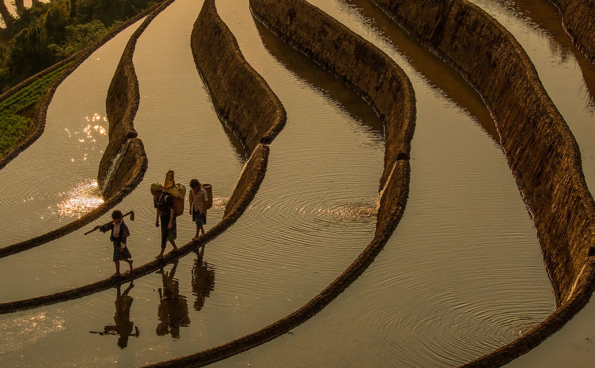 Water Real People Reflection Nature Group Of People Lifestyles High Angle View Togetherness Adult Walking People Day Women Standing Outdoors Kids Children Work Working Paddy Field Rice Terraces Reflection Three Quarter Length Sunset Golden Hour North Vietnam