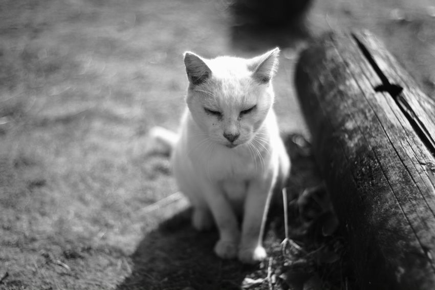 I wana be close to you Black And White Photography B & W Photography Black And White B & W  X-Pro1 Fujifilm X-Pro1 Japan Voightlander Nokton Classic 40mm/F1.4 SC My Photography Japanese  Voigtlnder Lakeside Street Cat Street Cats Cats Cat