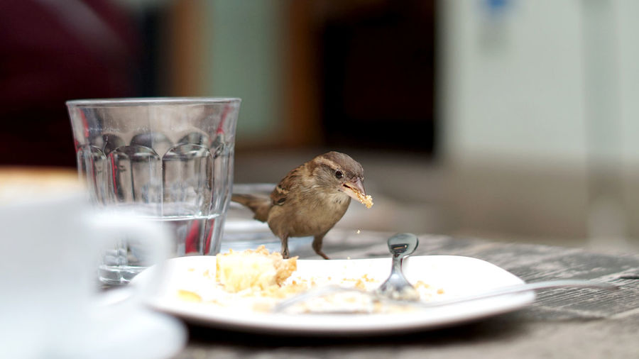 Close-up of bird in glass on table