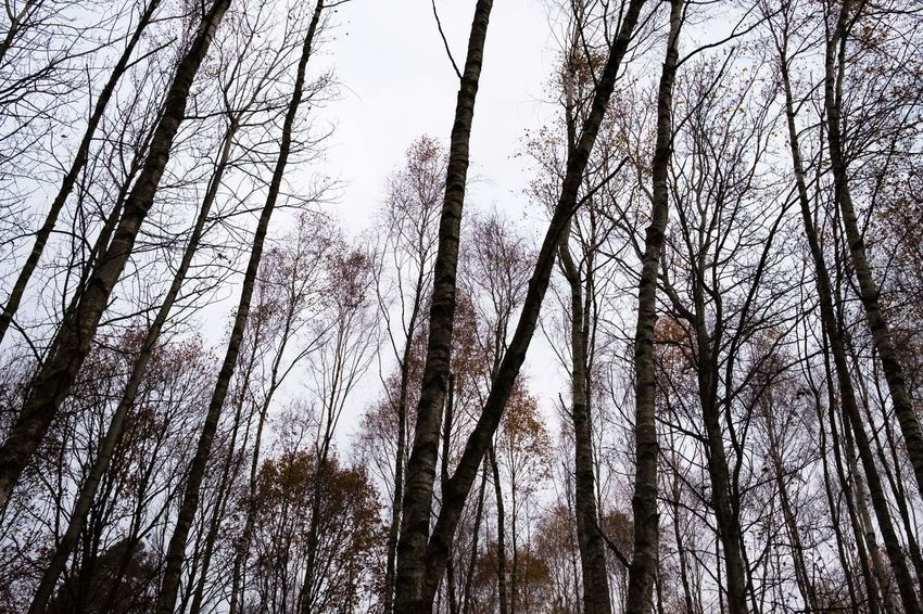 Autumn Autumn Colors Fujinon 23mm F2 Poland Polska X Pro2 Bare Tree Beauty In Nature Branch Day Forest Fujifilm Fujifilm_xseries Growth Low Angle View Nature No People Outdoors Sky Tranquility Tree Tree Trunk WoodLand