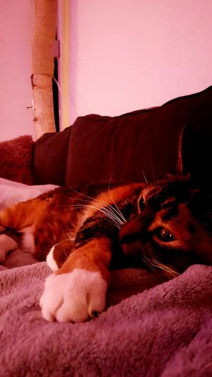 Purrrrrrfect Catslife Cats & Dogs OpenEdit Relaxing Enjoying Life Couchlife Simple Home