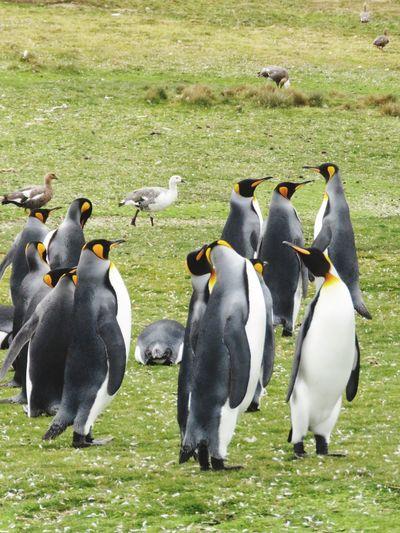 Flock of birds on the ground
