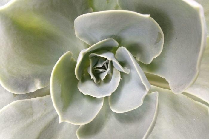 Flower Head Flower Biology Living Organism Close-up Plant Plant Pod Paleontology Spiral Plant Life Spiral Stairs Evolution  Lotus