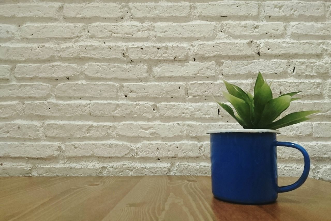 Close-Up Of Potted Plant In Coffee Cup On Table Against Wall