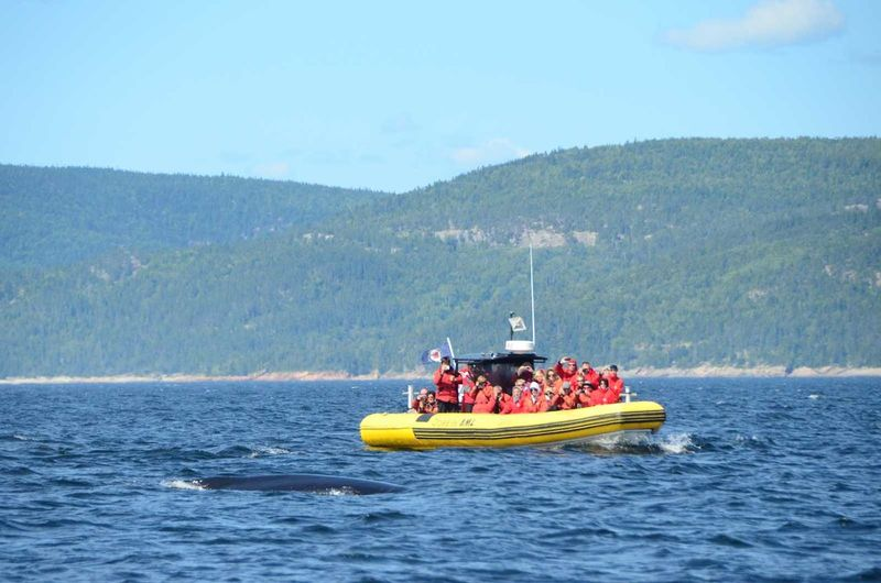 Animals Boat Canada Cetacei Mammal Nature Outdoors Quebec River Tadoussac Water Whale Whale Watching Zoology