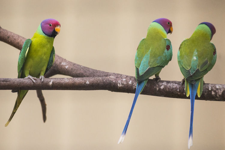 View of parrot perching on branch
