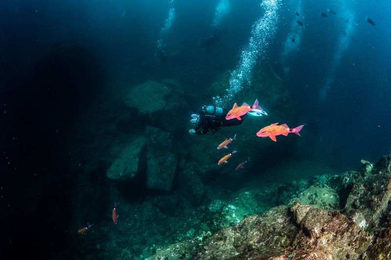 japan Underwater Sea UnderSea Water Swimming Animal Wildlife Sea Life Animals In The Wild Adventure Exploration Nature Sport Unrecognizable Person Fish Animal Rock - Object Scuba Diving Rock Aquatic Sport Marine Outdoors Underwater Diving