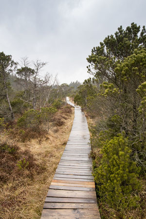 Beautiful Nature Boardwalk Clouds Clouds And Sky Cloudy From My Point Of View Landscape Landscape_Collection Landscapes Landscapes With WhiteWall Natural Beauty Nature Nature On Your Doorstep Nature_collection Naturelovers Outdoors Path Pathway Rainy Days Scenics Sky The Way Forward Tree Trees Vanishing Point