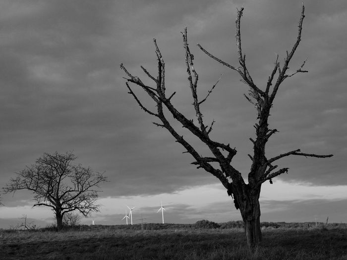 Monochrome Autumn Sky Outdoors Field Tree Black And White Cloud - Sky Nature Landscape Grass Botany Plant Leaf Wind Energy