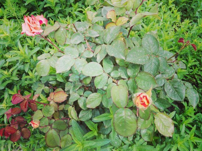 Flower Leaf Red