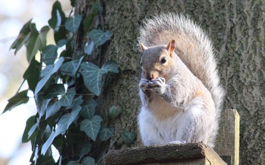 Squirrel Animal Wildlife One Animal Animals In The Wild Mammal Vertebrate No People Rodent