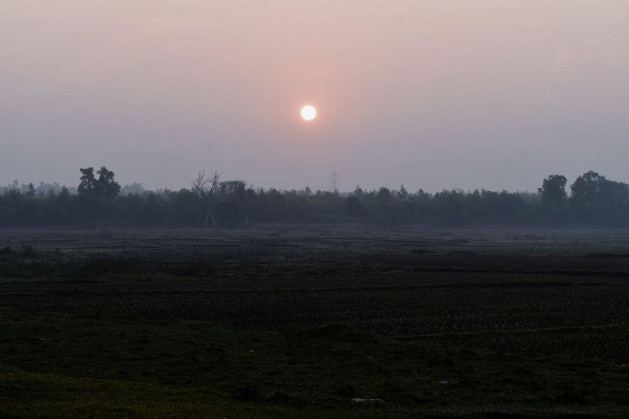 Wintertime Foggy Morning Agriculture Field Sun Rural Scene Landscape Fog Tree Beauty In Nature Nature Shades Of Winter