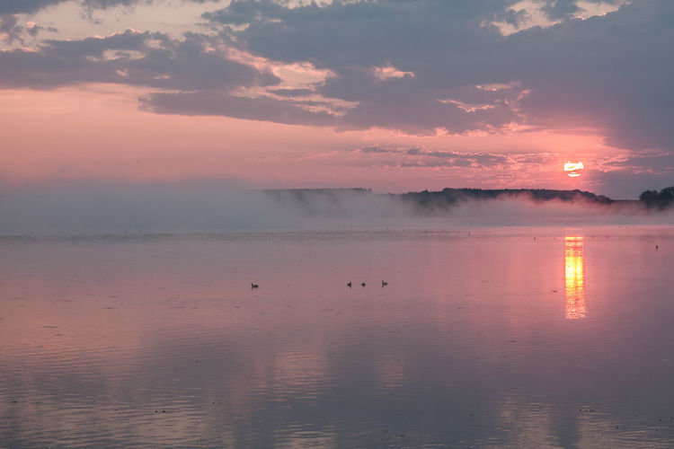Federsee Animal Themes Animal Wildlife Animals In The Wild Beauty In Nature Bird Day Fog Foggy Morning Lake Nature No People Outdoors Reflection Scenics Sky Sun Sunset Tranquil Scene Tranquility Water