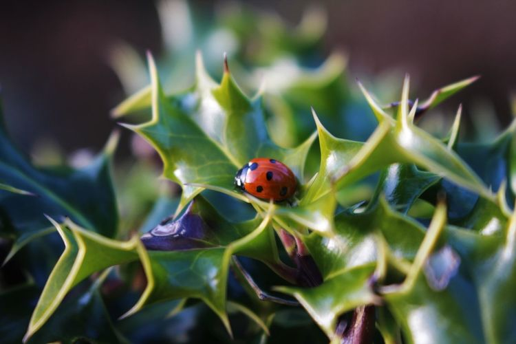 Ladybug/Ladybird Animal Themes Animal Wildlife Animals In The Wild Close-up Day Fragility Insect Ladybug Leaf Nature No People One Animal Outdoors Red Tiny