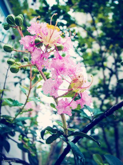 Rain Day Snap Ricoh Gr-D
