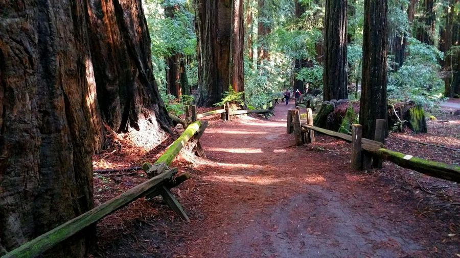 Walking the Path Real People Redwood Armstrong Redwoods Forest Silence Awe Inspiring Elegant Copy Space Distance Depth Zen Tall Light And Shadow Pathway Path Walking Rewilding Hiking Leisure Activity Peaceful Silence Dreans Railing Tree Tree Trunk Day Nature Outdoors Growth