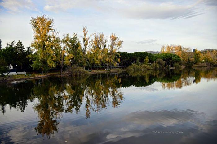 Autumn Colors EyeEm Best Shots - Autumn / Fall Autumn Collection Melancholic Landscapes