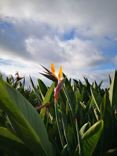 Close-up of flowering plant against sky
