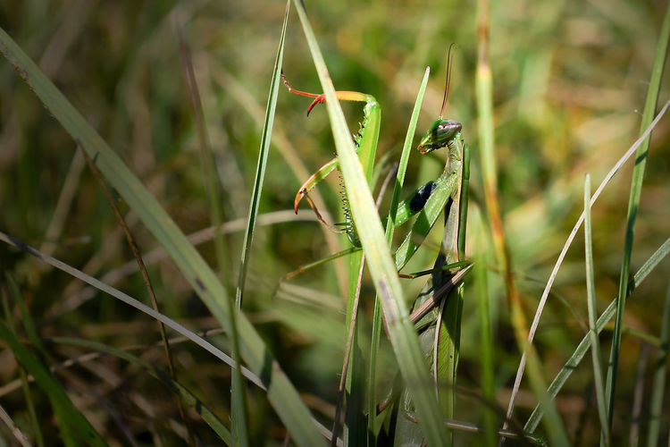 Close-up of snake on grass in field