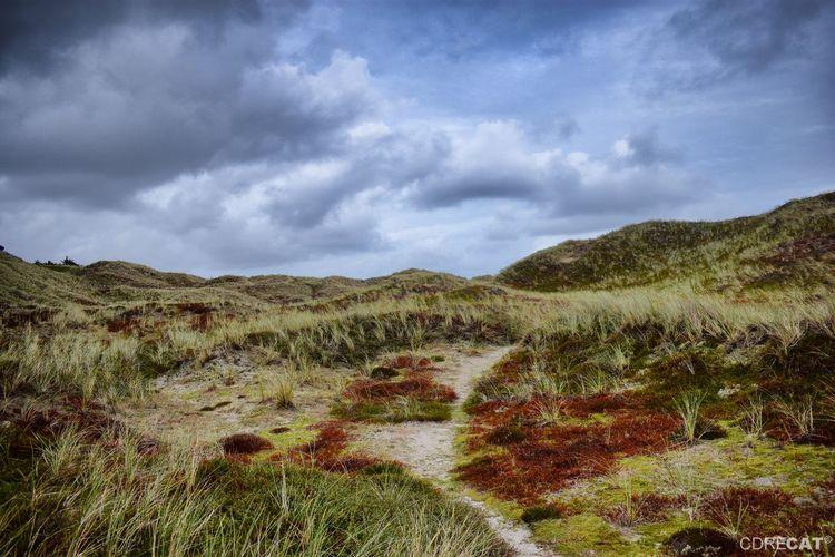 Northsea Denmark Denmark 🇩🇰 Landscape_Collection EyeEm Nature Lover EyeEm Masterclass Dunes Dunescape Strolling Path Pathway Sand Dune Grass Landscape