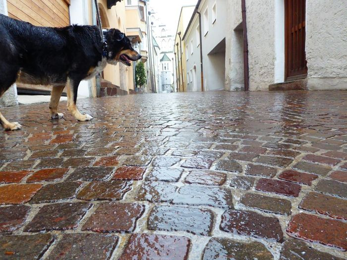 Hall In Tirol Dogs Of EyeEm Paving Stone